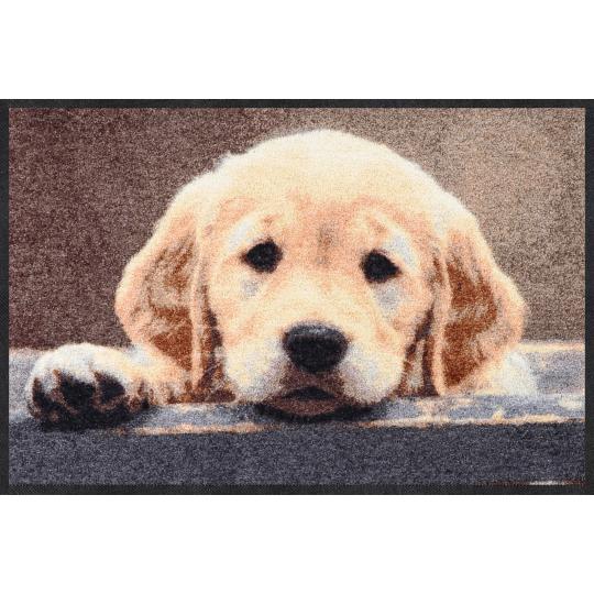 Fussmatte Nosy Dog Braun 50x75 cm